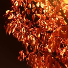 #365 It's really really Autumn.