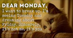 Are you looking for funny quotes about monday? We have come up with a handpicked collection of monday meme funny and happy monday funny images. Happy Monday Funny, Happy Monday Quotes, Monday Humor Quotes, Funny Quotes, Life Quotes, Your Smile, Make You Smile, Monday Inspirational Quotes, Chill Outfits
