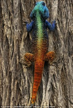 Show offs of the natural world: Vibrant colours and striking looks of some of the planet's most colourful animals | Mail Online