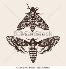 """Résultat de recherche d'images pour """"illustration papillon sphinx"""""""
