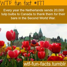 Canada housed and protected Dutch royalty and a princess was born there. Canada temporarily declared the hospital room she was born in Dutch territory so she would have full Dutch citizenship. This is how the Netherlands thanks Canada for that. Wtf Fun Facts, True Facts, Funny Facts, Random Facts, Odd Facts, Canadian Things, I Am Canadian, Canadian Facts, The More You Know