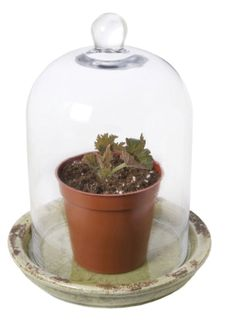 Tuberous begonias are colorful, shade loving plants that love warm weather. Start the tubers indoors this winter so you can enjoy months of flowers. Tuberous Begonia, Terrarium, Gardens, Indoor, Bees, Jar, Plants, Terrariums, Interior
