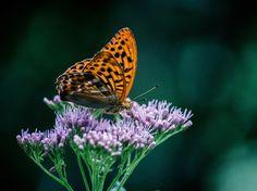Awesome Schmetterlingsbox von Global