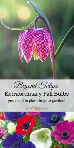 Tulips are lovely but there are many more choices available for hardy bulbs to plant in the fall for that can really take it up a notch. Plant these bulbs now for a beautiful (and interesting) spring garden!