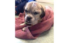Have you heard Survivor's story? REPIN to help Burlington County SPCA Humane Police!