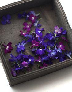 tinctory: Ice Flowers