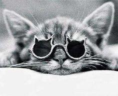 Cat in cat glasses. This picture is lifeeeee ❤