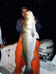 Warren Buffett of the fishing world: Connecticut fisherman Greg Myerson repeatedly breaks own striped bass records Bass Fishing Tips, Sport Fishing, Gone Fishing, Kayak Fishing, Fishing Tackle, Saltwater Flies, Saltwater Fishing, Fishing Humor, Fishing Stuff