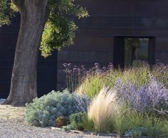 LAYERED | In this garden bed, plants include silvery Artemisia 'Powis Castle', perennial grass Stipa tenuissima, and purple spikes of Russian sage.