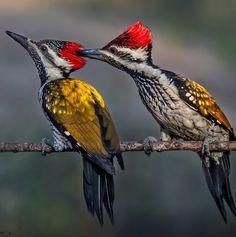 ¿que pájaro es más pequeño que un gorrión y ligeramente verdoso? - Buscar con Google