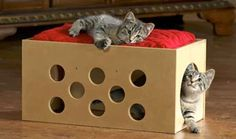 Cucce fai da te per gatti (Foto)   PourFemme