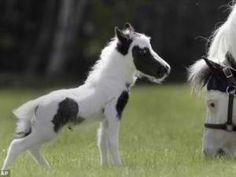 Teeny horse.