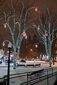 Winter lights of Tommy's park, Portland.  Beautiful with pink and teal combination of lights.