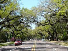 Government Street in downtown Mobile, Alabama.  The City Under the Oaks