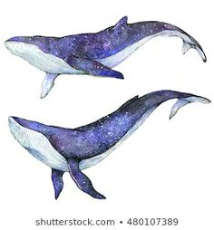 Find Set Cosmic Whales Watercolor Hand Drawing stock images in HD and millions of other royalty-free stock photos, illustrations and vectors in the Shutterstock collection. Watercolor Whale, Watercolor Animals, Watercolor Paintings, Animal Drawings, Art Drawings, Whale Drawing, Whale Sketch, Whale Illustration, Whale Tattoos