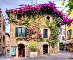 Vive la Provence