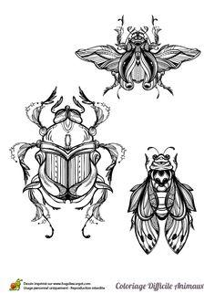Pour les fans d'insectes, ce dessin illustre à la perfection tes animaux favoris. Coloriage pour niveau avancé