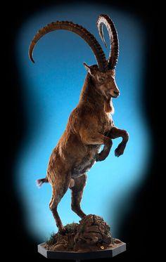 Asia/North America Desert Animals, Nature Animals, Animals And Pets, Cute Animals, Ibex Goat, Bear Mounts, Hirsch Tattoo, Wildlife Decor, North America