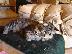 Discover nature at Bent's Old Fort National Historic Site -- this resident cat can often be found in the trade room. Santa Fe Trail, Old Fort, Historical Sites, Cats, Nature, Room, Animals, Bedroom, Gatos
