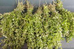 Jak uchovat zelené bylinky na zimu Korn, Herbs, Yummy Food, Baking, Plants, Gardening, Fitness, Ideas, Delicious Food