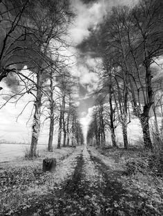 Vanishing infrared monocrome by StegoPhotoStore on Etsy, €7.90