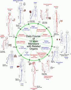meridians | The 12 Main Meridians