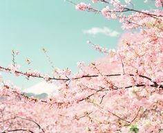 春景色 (by **sione**)