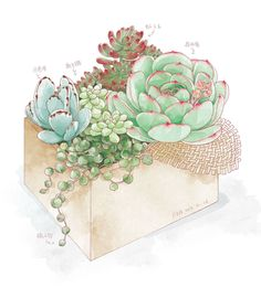 Potted succulent Illustration #