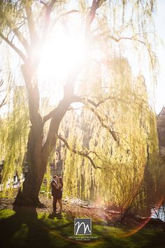 Central Park Engagement Photos - love this weeping willow tree, hoping there's one at the park you go to!