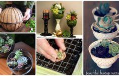 DIY Indoor Outdoor Succulent Garden Ideas Projects and Instructions