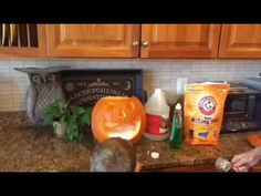 Make a Spewing Pumpkin Halloween Activities, Scientists, Free Printables, Pumpkin, Youtube, How To Make, Gourd, Free Printable, Pumpkins