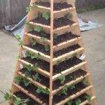 garden-pyramid-150x150.jpg (150×150)