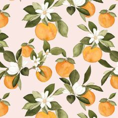 Oranges Fabric - Orange Blossom On Pink By Mintpeony - Summer Fruit Kitchen Decor Citrus Cotton Fabric By The Yard With Spoonflower Fruit Kitchen Decor, Orange Kitchen Decor, Orange Pattern, Fruit Pattern, Orange Tapete, Orange Wallpaper, Fruit Illustration, Botanical Illustration, Orange Fabric