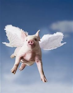 When pigs fly... Kristen, this one is for you!