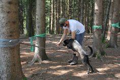 Mensch und Hund Seminar Goats, Survival, Animals, Pet Dogs, Animales, Animaux, Animal, Animais, Goat