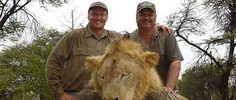 """""""O GRITO DO BICHO"""": Descoberto homem que matou leão mais acarinhado do..."""