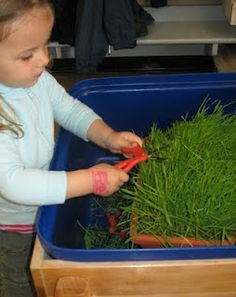 """cutting grass sensory tub or grass seed growing in paper cups. Draw a face onto the cup and the kids give their cups a """"haircut"""" a couple times a week. Cutting Activities, Montessori Activities, Motor Activities, Preschool Activities, Sensory Tubs, Sensory Rooms, Sensory Play, Outdoor Games, Kindergarten"""