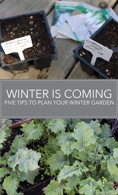 Winter is coming: five tips to plan your winter garden. What you need to do in summer to keep eating from your garden all year long!