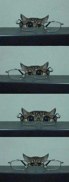 Kittyyyyyyyyy