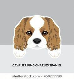 Vector Illustration Portrait of Cavalier King Charles Spaniel Puppy. Cavalier King Charles, King Charles Spaniel, King Drawing, Dog Vector, Photoshop, Spaniel Puppies, Dog Crafts, Dog Illustration, Portfolio