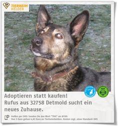 """Rufus wurde von einer Partnerorganisation des Tierheim Detmold übernommen.  http://www.tierheimhelden.de/hund/tierheim-detmold/schaeferhund_mischling/rufus/13072-0/  Er ist freundlich, hat guten Grundgehorsam und geht gut an der Leine. Er ist jedoch auch sensibel und ein """"Hund der leisen Töne"""". Leider scheiterte wohl daran die letze Vermittlung. Mit Artgenossen versteht er"""