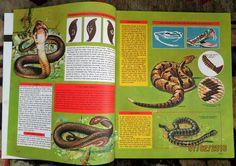 Knowledge Magazine NO112 Poisonous Snakes Turkey SIR Archibald Malndoe 1965   eBay