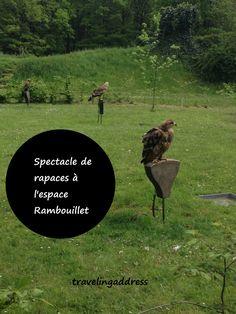 Spectacle de rapaces à l'espace Rambouillet, #rambouillet, France