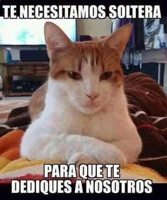 Imagenes de Chistes #memes #chistes #chistesmalos #imagenesgraciosas #humor www.megamemeces.c... ツ➧ http://www.diverint.com/humor-grafico-espana-caras-graciosas-bebes