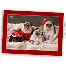 Pugs Heart to Heart Christmas Cards