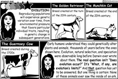 You don't believe in evolution? But evolution is NOT a matter of belief. It is science, and science does not involve belief. Cat Evolution, Puff The Magic Dragon, Atheist Agnostic, Munchkin Cat, Mad Science, Free Thinker, Atheism, Satire, Christianity