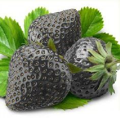 Amazon.com: 50 Seeds Black Strawberry Seeds: Patio, Lawn & Garden.  Ever wonder why there's a preoccupation with black colored food and flora? I do. Maybe people are more goth than they're willing to admit.