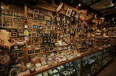 Moderne versie van Wunderkammer - Evolution Store