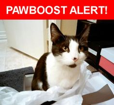 Please spread the word! Keekee was last seen in La Mesa, CA 91942.    Nearest Address: Near Marengo Ave & Vincetta Dr