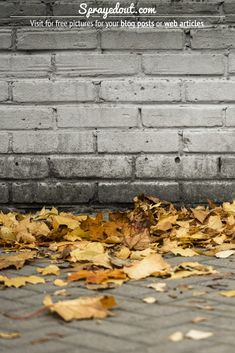 Fallen leaves on a sidewalk. Vibrant, full of colors and beauty and a grey-ish sidewalk. Visit to download free picture for your blog or web article. #autumn #fall #fallenleaves #leaves Fall Leaves Pictures, Fall Pictures, Autumn Fall, Autumn Leaves, Fallen Leaves, Sidewalk, Vibrant, Grey, Colors